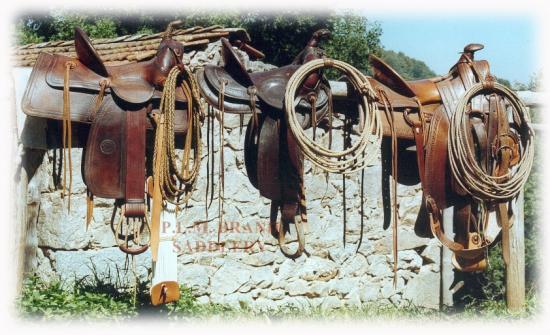 3-saddles.jpg